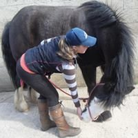 Laura Stickley Holistic Equine Massage Practitioner