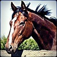 Well Trained Horses, a Horse Rescue @Icssoma Farm