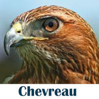 Chevreau Consulting Ltd