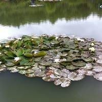Weston pools Fishery