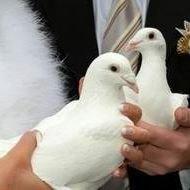 Unity doves dove release