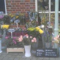 Courtyard Flowers (Lymington)