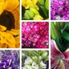 Blooming Girls Florists