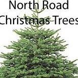 Freshly Cut Christmas Trees - Berwick upon Tweed
