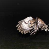 Andy Howey Birds of Prey Centre