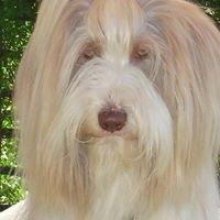 Hylands Dog Care