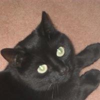 Little Black Cat Cards