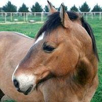 Wayward Ponies' Home, Inc.