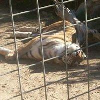 Sierra Endangered Cat Haven