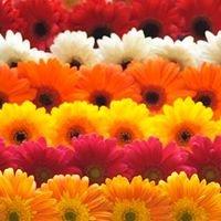 Flower Box 101