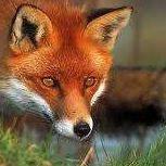 Fox Family Jerky
