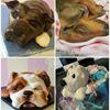 Fairy Artistic Bakery