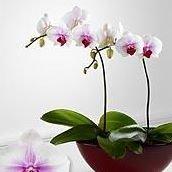 Ladue Florist, Inc.