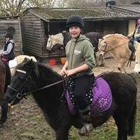 Pony Experience