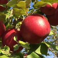 Hidden Cove Orchard
