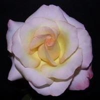 South Metro Rose Society