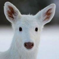 Seneca White Deer, Inc