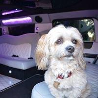 West Line Limo Tours & Pet Transport Perth