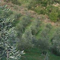 Azienda agricola A. Ludovici