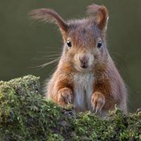 Wildlife Photos In Matlock Bath