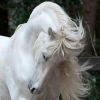 Natural Horse Sense