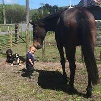 Versatile Equines
