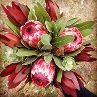 Kalympa Wild Flowers