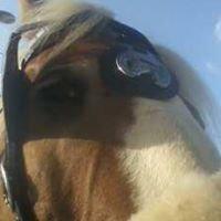 Carolina Horse and Carriage