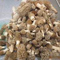K&C Mushroom