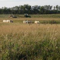 Neilson Cattle Company