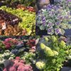 Marsh Nurseries & Garden Centre Wirral