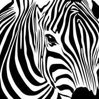 The House Of Zebra