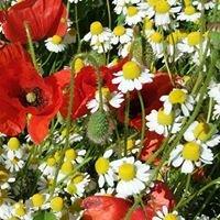 """Erboristeria Herbarium """"le tue erbe in città""""di Rosanna Manna"""