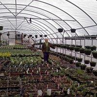 Patsy's Herb Farm