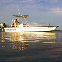 OBX Dolphin Tours