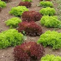 Over the Grass Farm Vegetable Garden