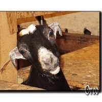 A Page-N-Thyme's Wyked Goat Soaps & Farm Products
