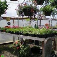 Blondie's Blooms & Berries Nursery