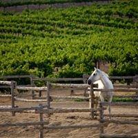 Tour Texas Wine