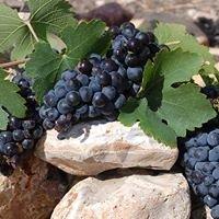 Vines on the Rocks