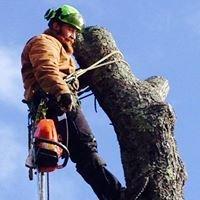 Adam Burtt Tree and Logging LLC