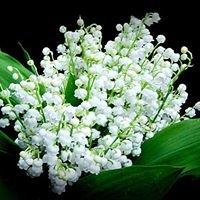 Flowers of East Bentleigh