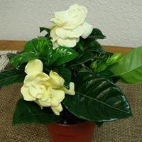 Artistic Bouquets & More Florist