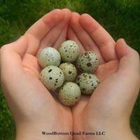 WoodBottom Quail Farms, LLC