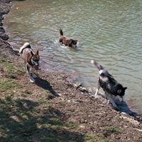 NorthBark Dog Park