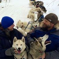 Dogsledding With Braeburn Siberians