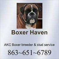 Boxer Haven