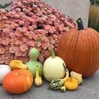 Engel Farms Pumpkin Patch