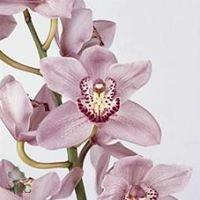 IFE  International Flower Exchange Inc.