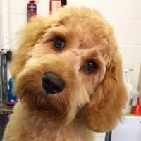 Waggy Tails Dog Grooming